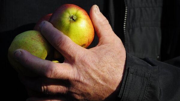 Les pommes. Image d`illustration - Sputnik France