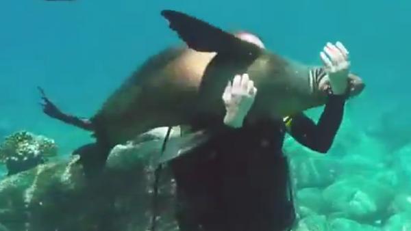 Un lion de mer curieux et amical - Sputnik France