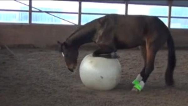 Un cheval s'amuse avec gros ballon - Sputnik France