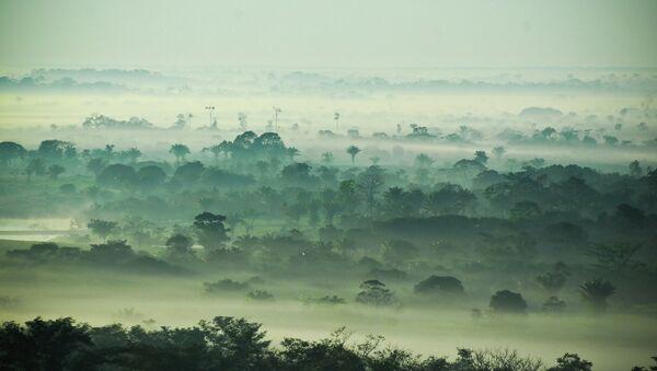 Леса Амазонии - Sputnik France