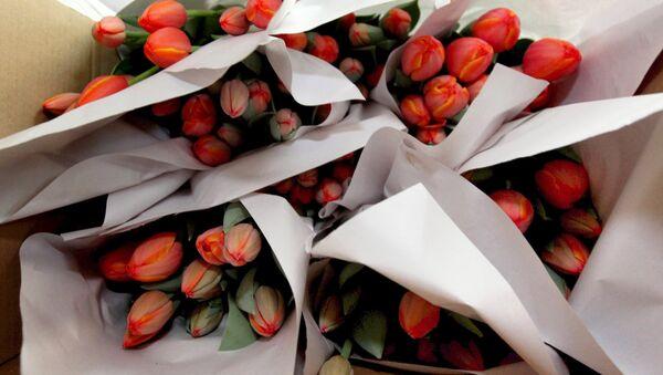 Сбор тюльпанов в теплице Владивостока - Sputnik France