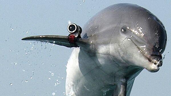 Un dauphin soldat - Sputnik France