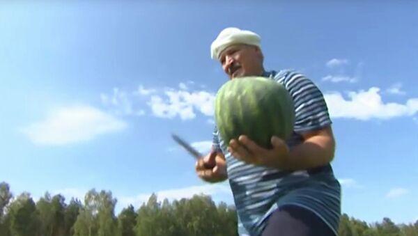 Biélorussie: le président récolte des pastèques - Sputnik France