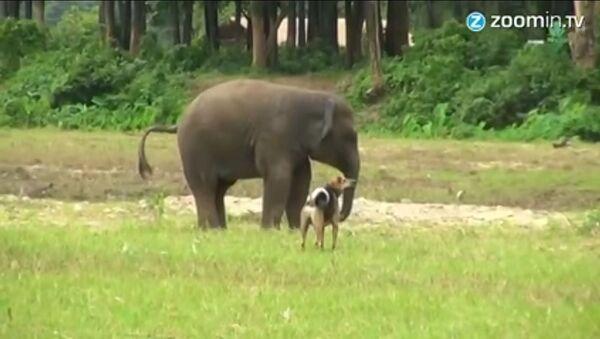 Un éléphanteau et un chien deviennent amis - Sputnik France