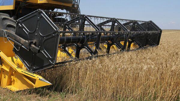 Récolte de blé en Russie - Sputnik France