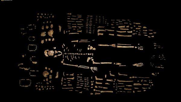 Un squelette fossilisé - Sputnik France