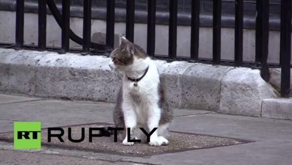 Un policier aide le chat de David Cameron à rentrer chez lui - Sputnik France