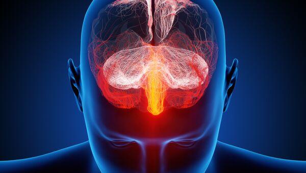 Un cerveau humain - Sputnik France