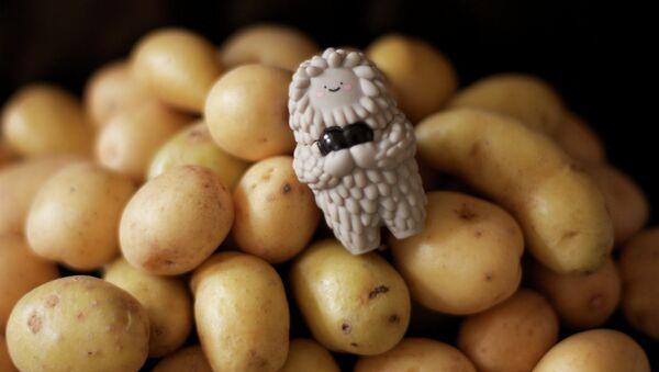 Les pommes de terre - Sputnik France