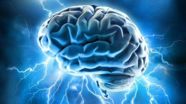 Brain power - Sputnik France
