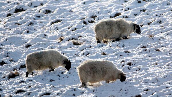 La neige. Image d'illustration - Sputnik France