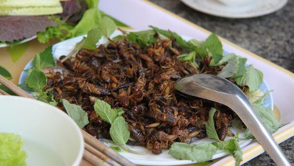 Des insectes comestibles - Sputnik France