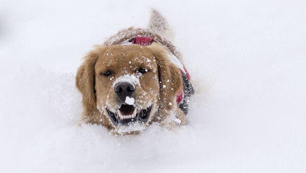 Le chien et la première neige, et autres nouvelles du monde des animaux - Sputnik France