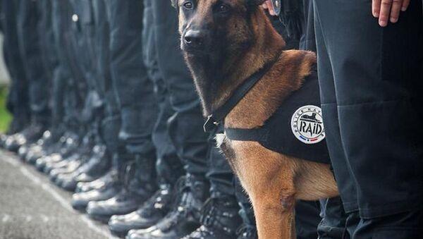 Le chien héros mort à Paris - Sputnik France