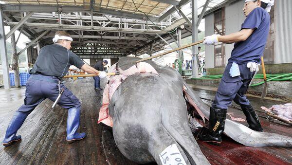 Tuer les baleines au nom de la « science » ? Le Japon s'y connait. - Sputnik France