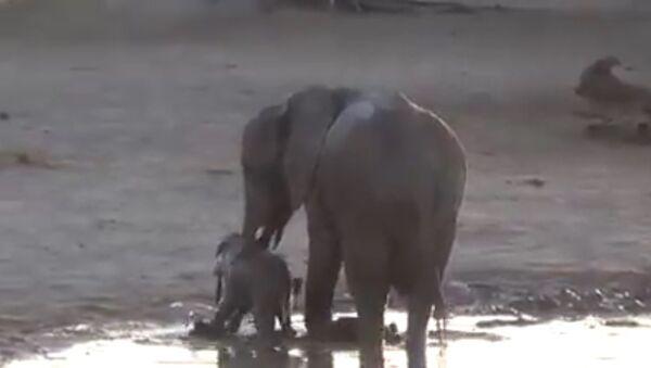 Un bébé éléphant prend un bain - Sputnik France