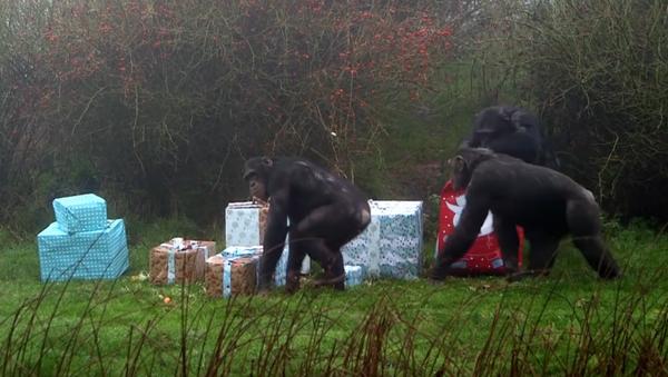 Les animaux reçoivent leurs cadeaux de Noël - Sputnik France