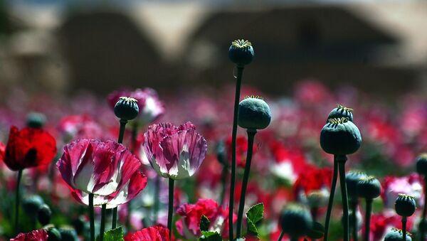 Les talibans s'emparent du paradis de la drogue en Afghanistan - Sputnik France