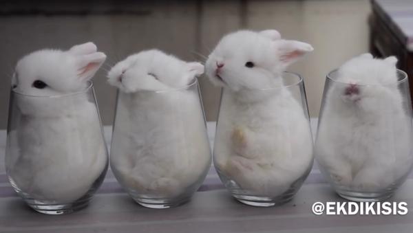 Les bébés lapins dans des verres - Sputnik France