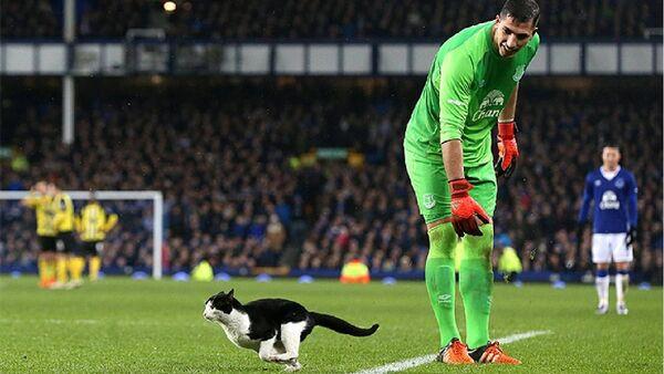 Un chat interrompt un match de football en Angleterre - Sputnik France