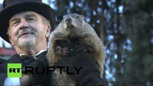 La marmotte Phil n'a pas vu son ombre - Sputnik France
