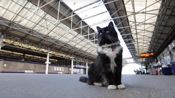 Une chatte promue contrôleuse de gare - Sputnik France