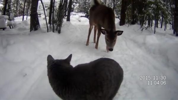 On voit bien que ce chat ne fait pas trop confiance au cerf. - Sputnik France