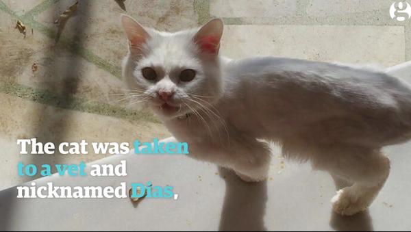 L'incroyable histoire d'un chat de migrants irakiens - Sputnik France