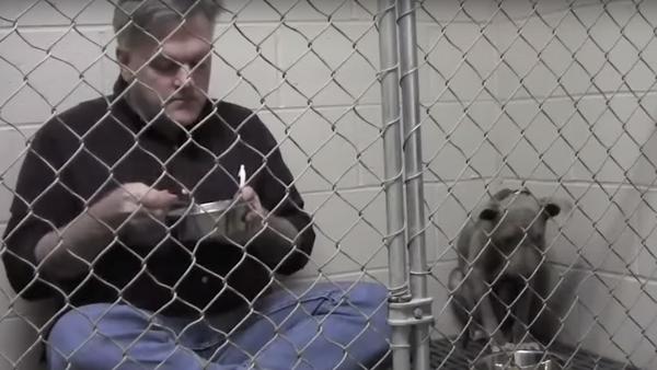 Un vétérinaire mange dans une cage pour sauver une chienne - Sputnik France