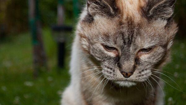 vieux chat - Sputnik France