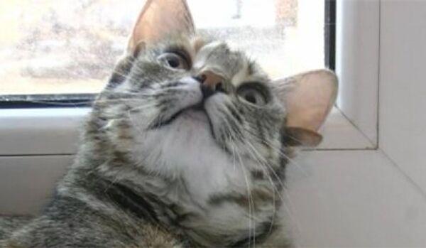 Une nouvelle race des chats à cinq oreilles élevée en Russie ? - Sputnik France