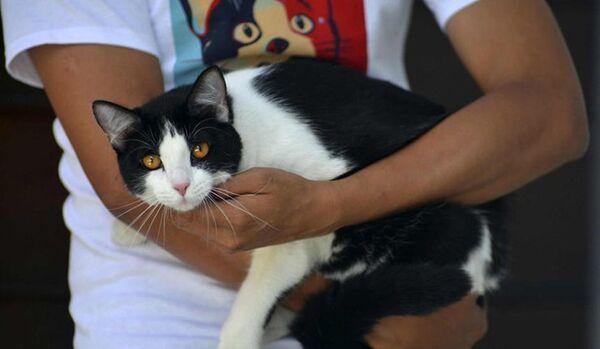 Un chat peut devenir maire au Mexique - Sputnik France