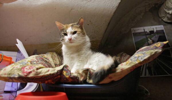 Saint-Pétersbourg : le musée de l'Ermitage prêt à donner une vingtaine de chats - Sputnik France