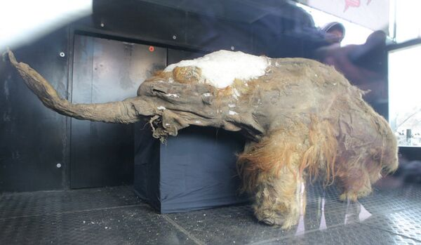 Les mammouths ont « occupé » Moscou - Sputnik France