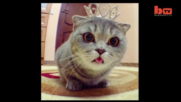 Melissa, le chat « Einstein » - Sputnik France