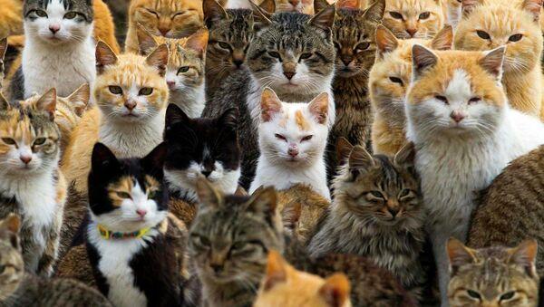 Les chats de l'île japonais d'Aoshima - Sputnik France