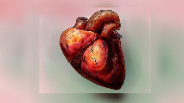 Human Heart W/ color - Sputnik France