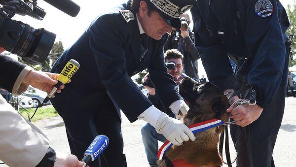 un chien  Choc - Sputnik France