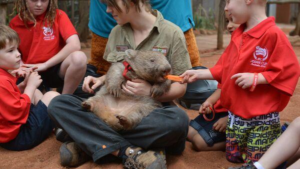 AFC Asian Cup Australia 2015 kids feed a wombat at Wild Life Sydney Zoo in Sydney on November 11, 2014. - Sputnik France