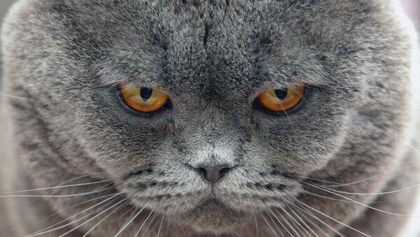 Allô, la police? Notre chat nous tient en otage! - Sputnik France