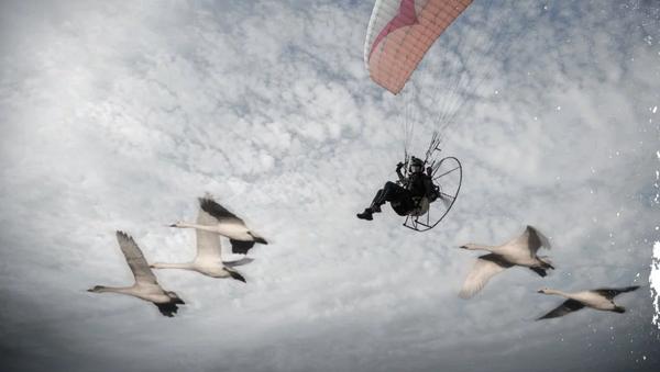 Sacha Dench qui qui va voler avec les cygnes de la toundra russe à Gloucestershire - Sputnik France