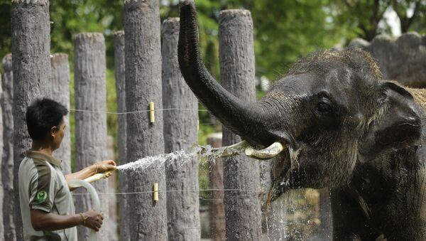 Panique au zoo: des éléphants lancent une opération de sauvetage (vidéo) - Sputnik France