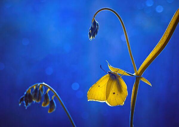 La photographe nous montre une nature surprenante qui devient pour elle un vrai conte de fées. - Sputnik France