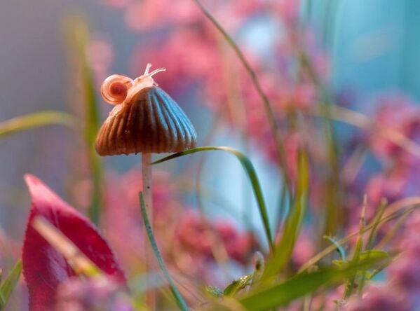 Sur ces photos, les plantes et insectes deviennent ici des décors et de surprenantes scènes de contes de fées. - Sputnik France