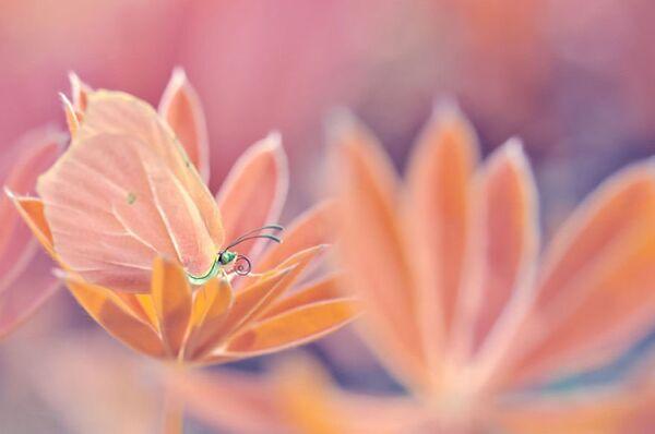 Pour Magda, le moment où elle fait des photos dans le jardin est comme le matin attendu lors de l'ouverture des cadeaux. - Sputnik France