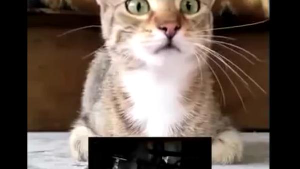 Le chat qui regarde un film d'Hitchcock - Sputnik France