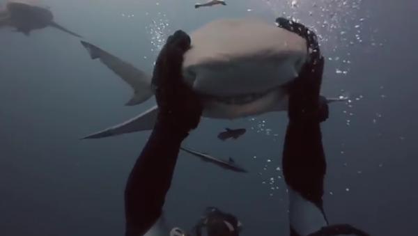 Mon ami le requin - Sputnik France