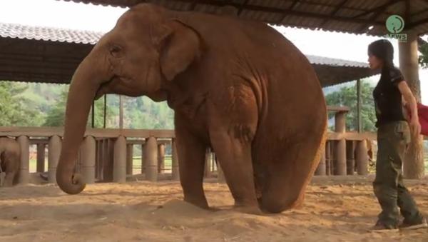 La berceuse qui endort les éléphants - Sputnik France