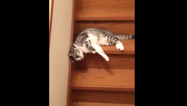 Un chat vraiment paresseux - Sputnik France