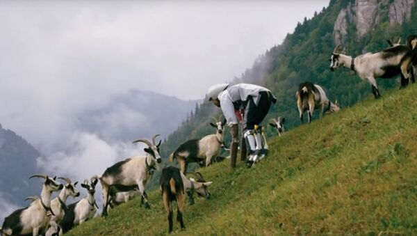 Thomas Thwaites - The man who tried to live as a GOAT, living as part of a herd in the Swiss Alps - Sputnik France